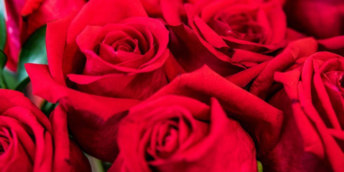 rosas-sanvalentin